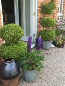 Can gardening help the sale of your property?